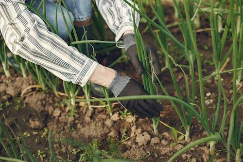 Photos gratuites de agriculture, centrales, cultiver