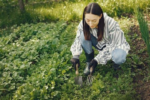 Foto stok gratis agrikultura, berkebun, berkebun di rumah