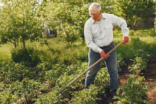 Foto stok gratis agrikultura, di luar rumah, kebun