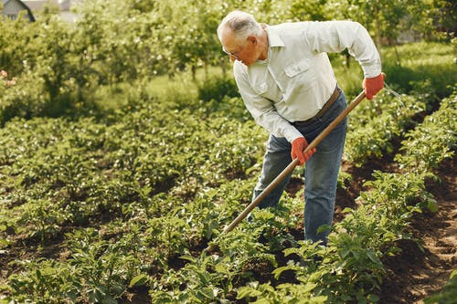 Man Using A Rake To Cultivate Land
