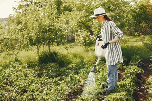 Woman Watering Green Plants