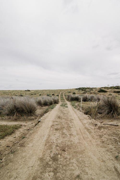 Ilmainen kuvapankkikuva tunnisteilla aavikko, acqua, asinara, autiomaa