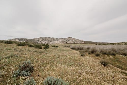 Ilmainen kuvapankkikuva tunnisteilla aavikko, acqua, asinara, auringonlasku
