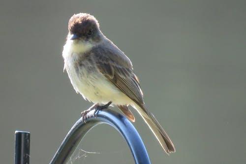 Fotos de stock gratuitas de amarillo dorado, animales en la naturaleza, aves