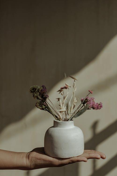 Imagine de stoc gratuită din decorativ, floră, flori