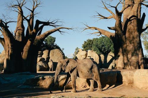 Strongest trees