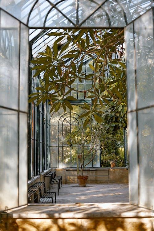 Fotos de stock gratuitas de adentro, al aire libre, antiguo, árbol