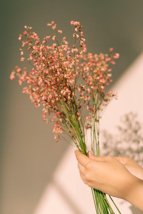 Imagine de stoc gratuită din buchet de flori, floră, flori uscate