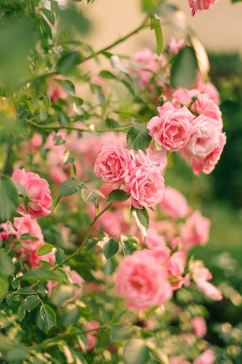 Ảnh lưu trữ miễn phí về bắn dọc, chụp ảnh hoa, đẹp