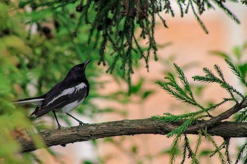 Free stock photo of bird, nature