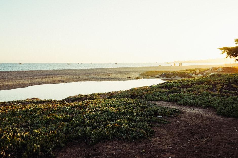 beach, pond, sea