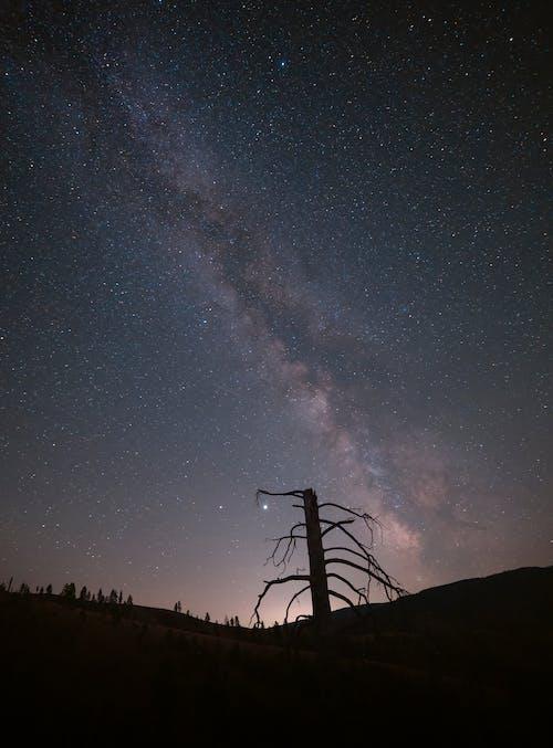 Безкоштовне стокове фото на тему «galaxy, астрономія, вечір, галактика»