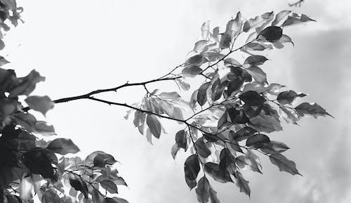 Gratis lagerfoto af blad, efterår, facebook cover, falde