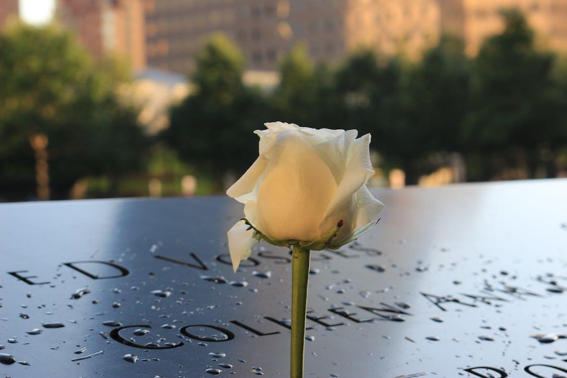 White Rose on 9/11 Memorial