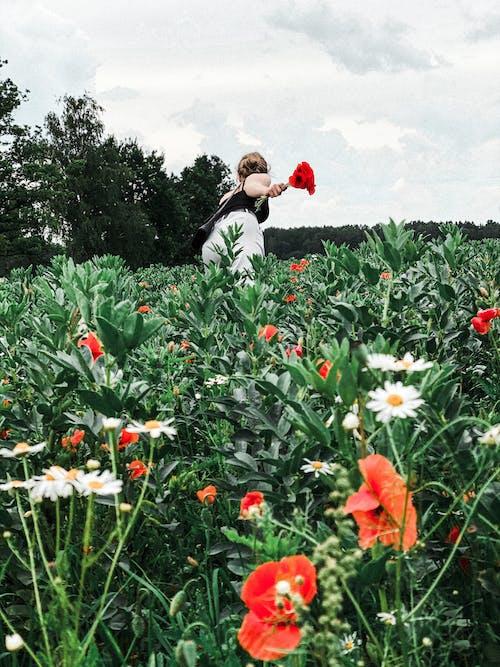 Základová fotografie zdarma na téma barva, farma, flóra, hřiště