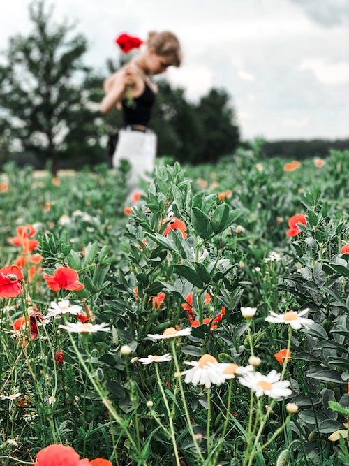 Základová fotografie zdarma na téma farma, flóra, hřiště, kvetoucí