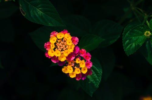Photos gratuites de belle fleur, fleur, fleur épanouie, fleurir