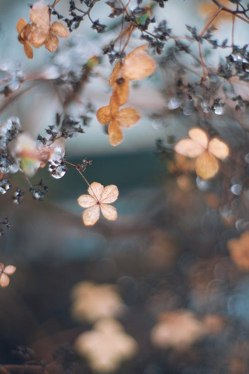 Bright flowers with faded petals growing on thin stalks in fall on blurred background
