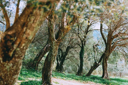 Scenic view of trees with wavy branches on thick trunks growing on hillside in daylight