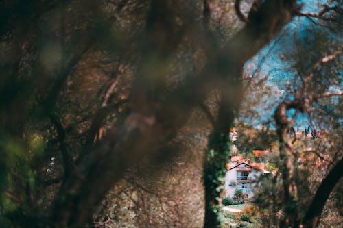 Základová fotografie zdarma na téma architektura, balkon, bezlistý, budova