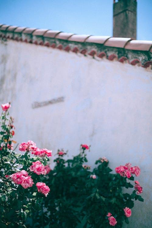 açık hava, armoni, aroma, ayrıntı içeren Ücretsiz stok fotoğraf