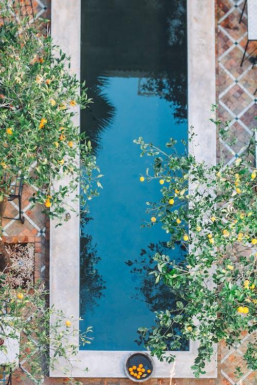 Безкоштовне стокове фото на тему «архітектура, басейн, безтурботний»