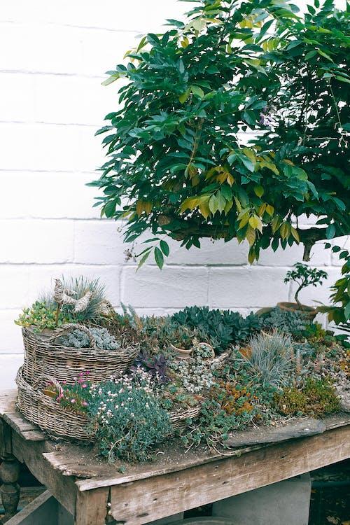 Verschiedene Pflanzen Auf Holztisch Im Hof