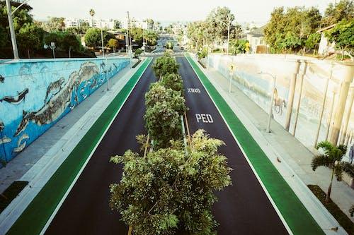 樹木, 街, 路 的 免费素材照片