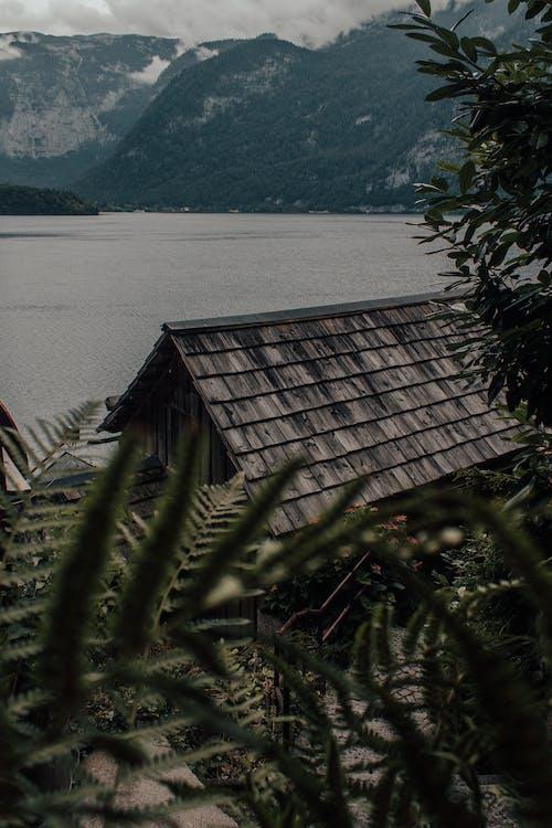 Immagine gratuita di acqua, albero, casa, esterno