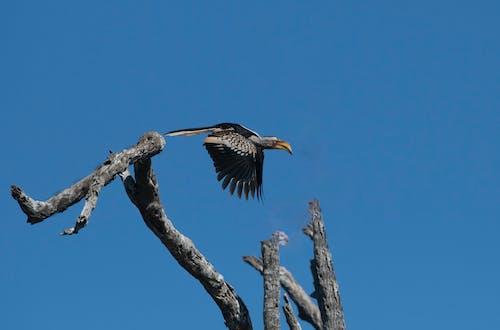 Gratis lagerfoto af fugl, Safari, vild fugl, zazo
