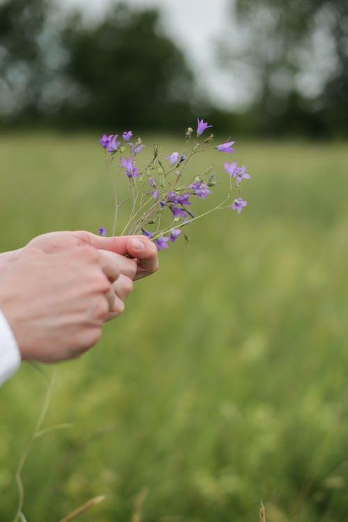Person Holding Purple Flower