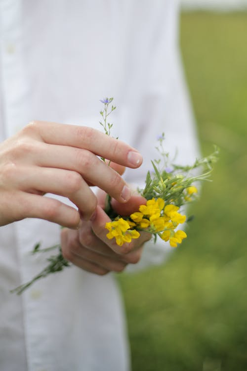 Person Holding Yellow and White Flower