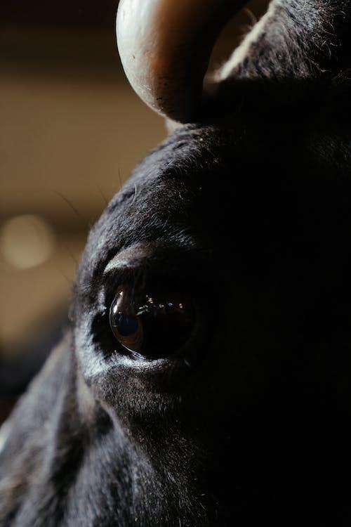 Black Short Coat Animal Head