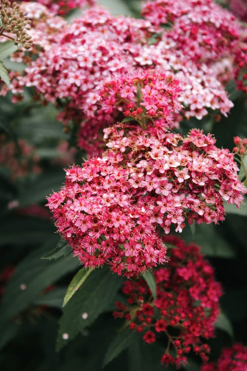 Photos gratuites de arbre, arbuste, botanique, bouquet