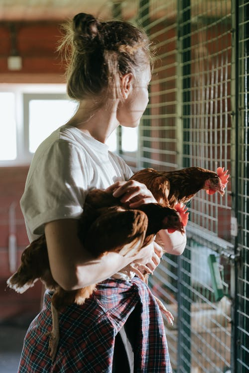 Girl in White Shirt Holding Brown and White Chicken