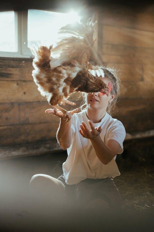 Photos gratuites de animal de compagnie, animal domestique, aviaire