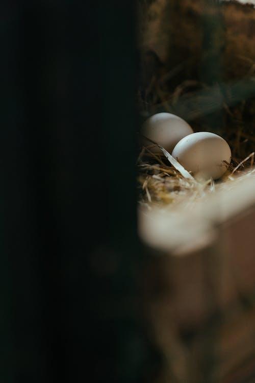 White Egg on Brown Nest