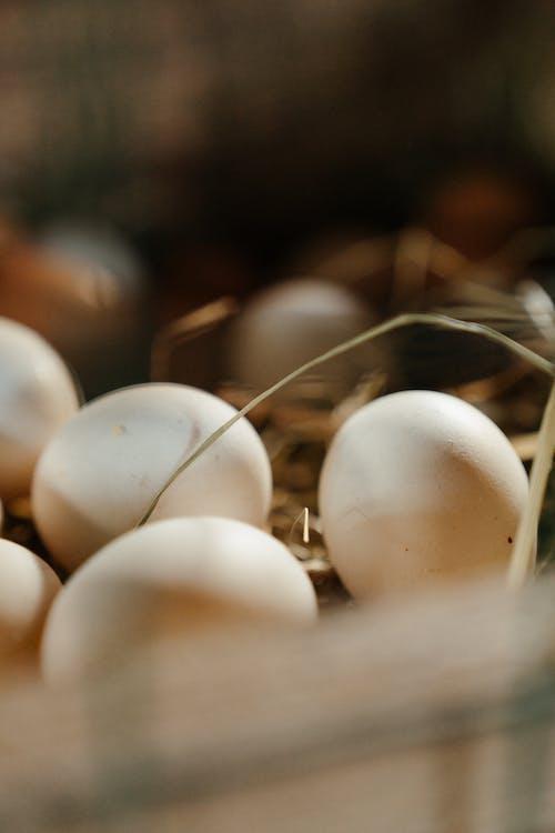 White Egg Lot in Tilt Shift Lens