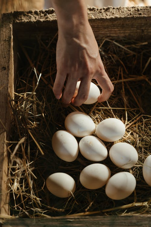 Person Holding White Eggs on Brown Grass