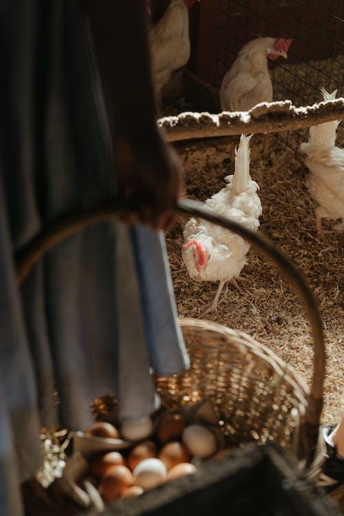 White Textile on Brown Woven Basket