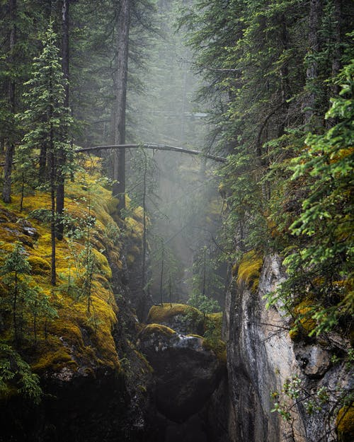Ravine in green forest in nature
