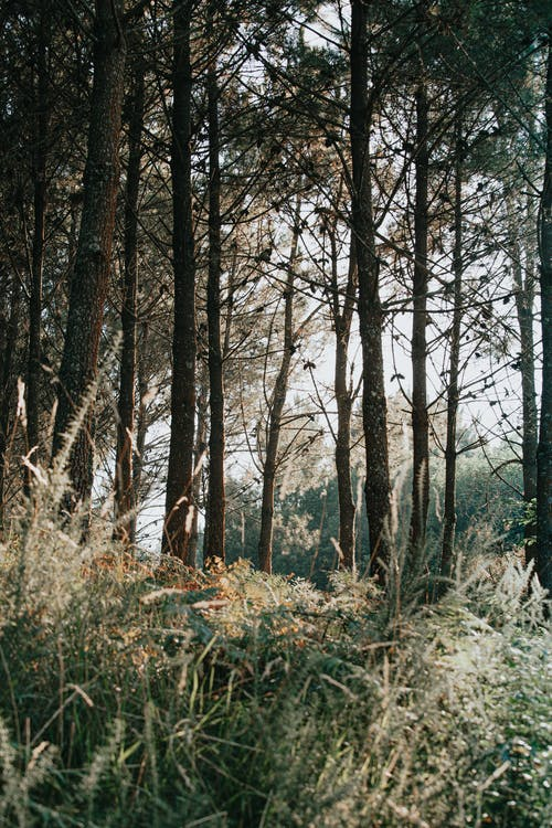 Overgrown thickets and trees in summer forest