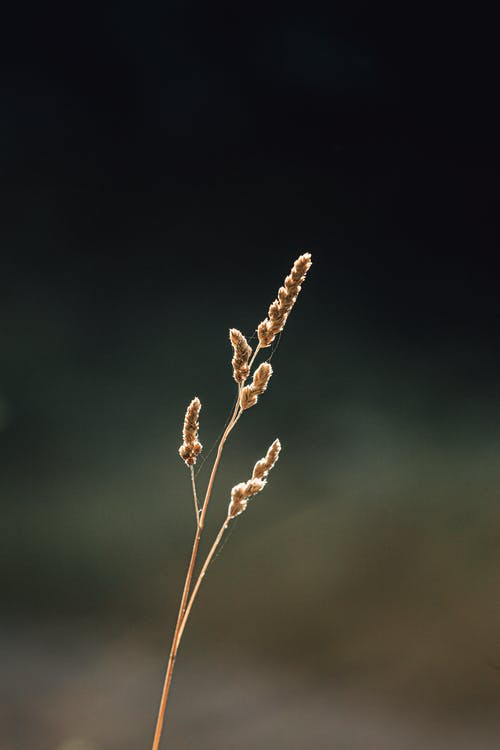 Picturesque view of dry shiny spike on thin stalk growing on blurred background