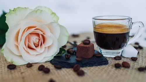 Darmowe zdjęcie z galerii z aromaterapia, blumen, ciemny, das leben beginnt nach dem kaffee