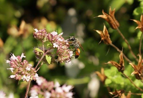 Free stock photo of blumen, insekt, wespe
