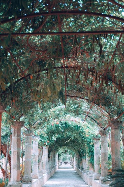 Lối đi Hình Vòm Hẹp Với Những Cột Cổ được Trang Trí Bằng Cây Xanh Trong Vườn