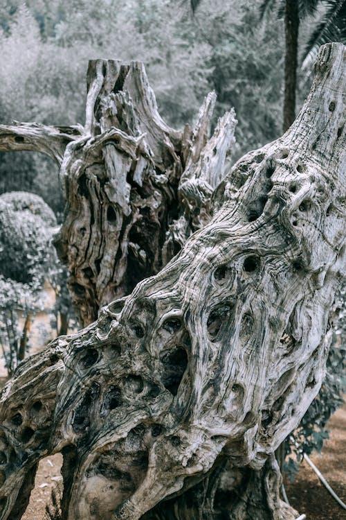 Abstract pattern of broken tree trunk