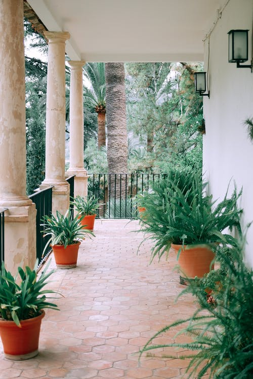 Cozy terrace with columns and assorted potted exotic plants