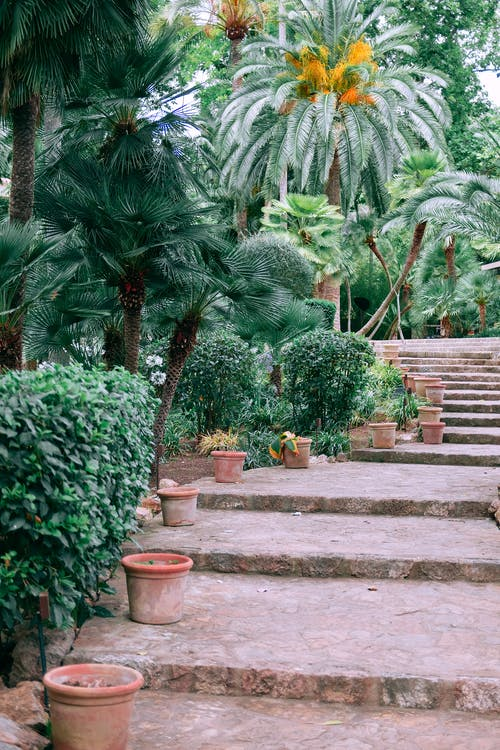 Clay pots decorating aged stone stairs surrounding by lush green tropical plants and trees in Jardines de Alfabia garden