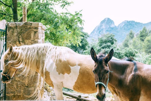 Side view of graceful palomino pinto and bay horses standing near fence in mountainous countryside on sunny day